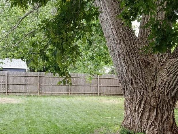 16 11th Street NE in Watertown, SD - Backyard with tree
