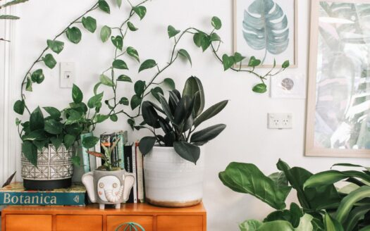 Apartment friendly plants