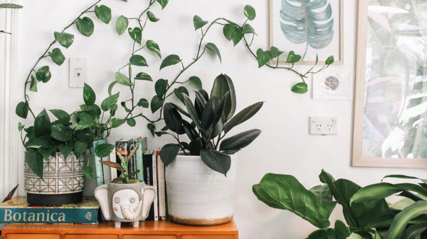 Apartment friendly plants